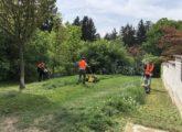 Úklid 24 s.r.o. - údržba zeleně